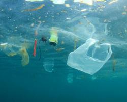 Некоторые виды рыбы, которую мы едим, содержат микрочастицы пластика